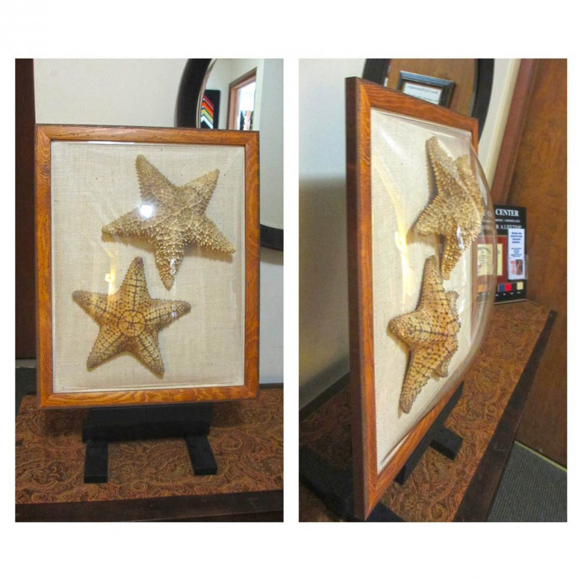 Starfish in 3D Domed Acrylic Glaze