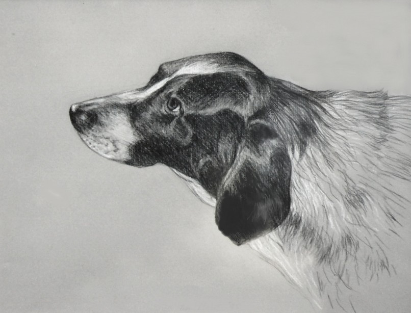 Head Dog Portrait in Pencil - Artists on Display - Custom Framing - Rose City Framemakers - Sparta New Jersey - New York
